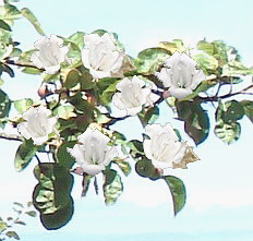 Close-up of pasty tree flowers