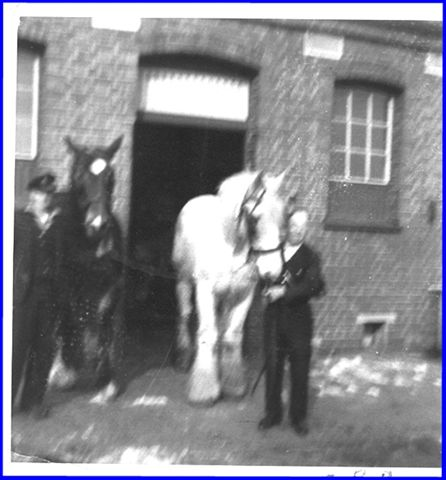 Father, Harry Davey, with the railway horses